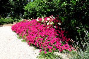 giardiniPapadopo_002